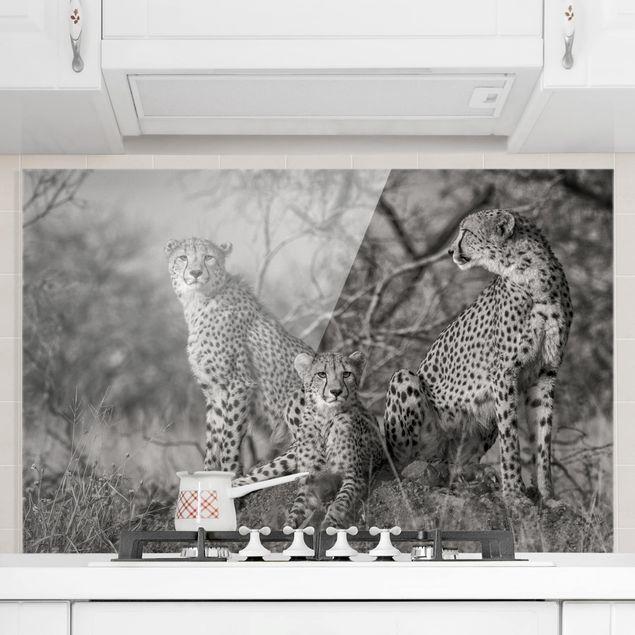 Spritzschutz Glas - Drei Geparden - Querformat 2:3