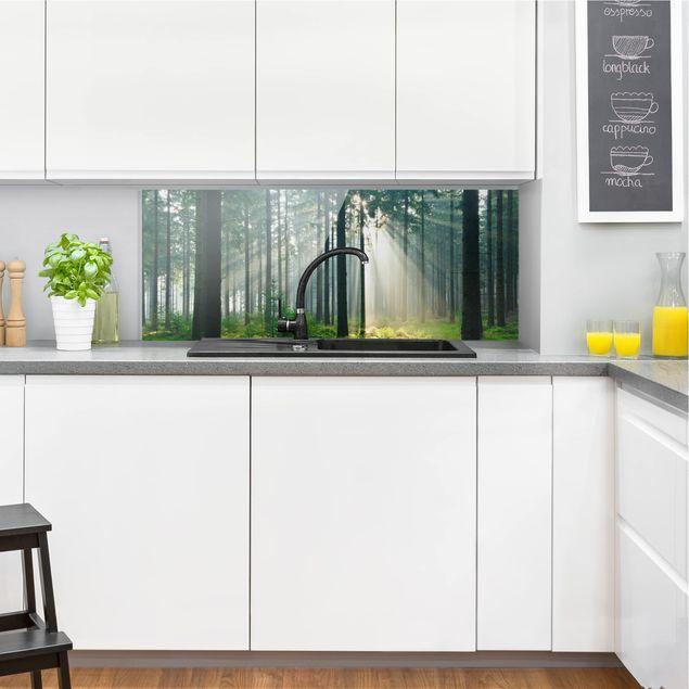 Spritzschutz Glas - Enlightened Forest - Panorama Quer