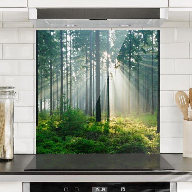 Spritzschutz Glas - Enlightened Forest - Quadrat 1:1