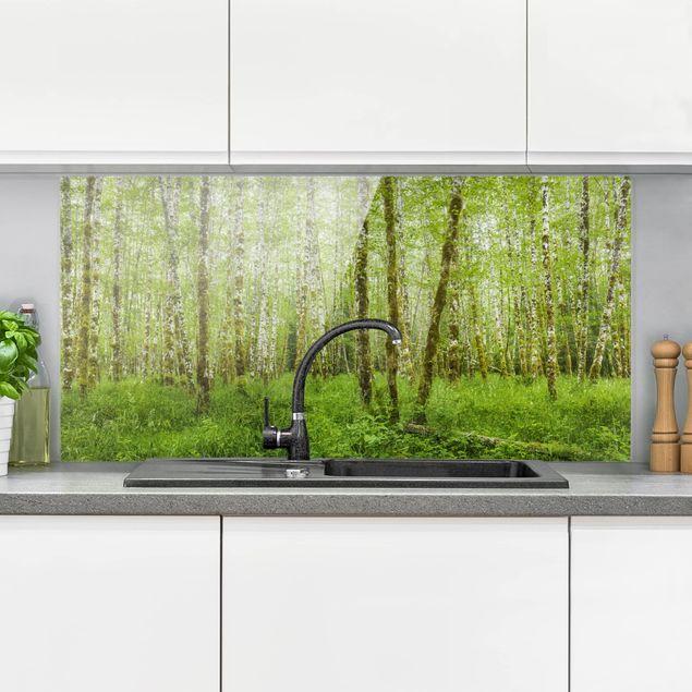 Spritzschutz Glas - Hoh Rainforest Olympic National Park - Querformat 1:2