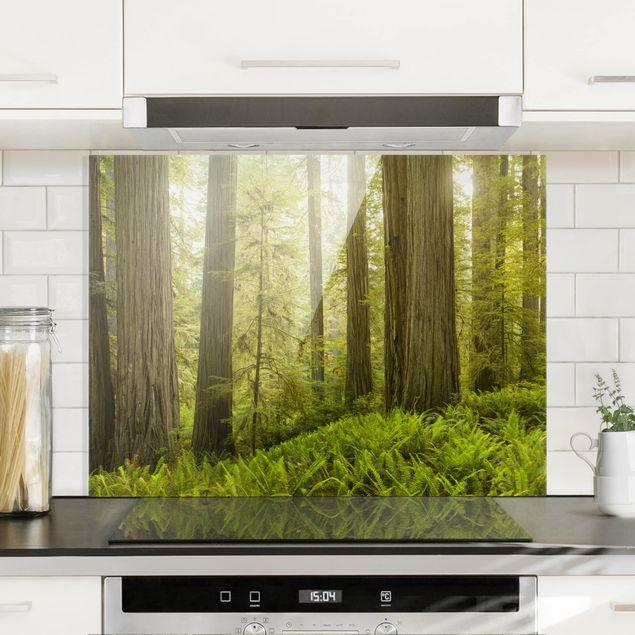 Spritzschutz Glas - Redwood State Park Waldblick - Quer 4:3