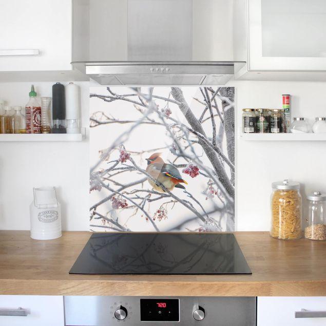 Spritzschutz Glas - Seidenschwanz im Baum - Quadrat 1:1