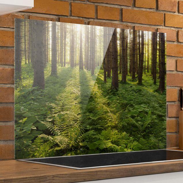 Spritzschutz Glas - Sonnenstrahlen in grünem Wald - Quer 3:2