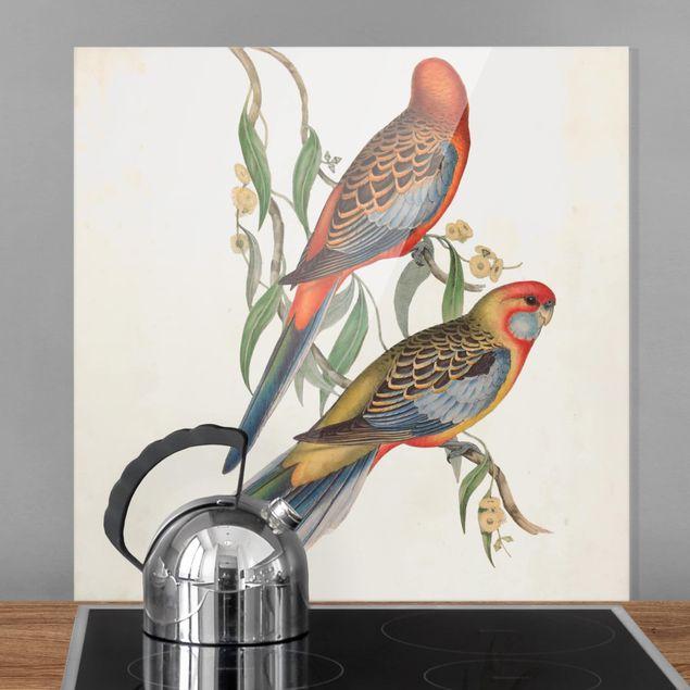 Spritzschutz Glas - Tropische Papageien II - Quadrat 1:1