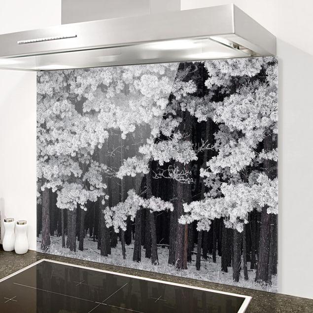 Spritzschutz Glas - Wald mit Raureif in Österreich - Quadrat 1:1