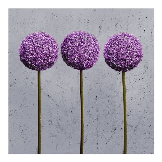 Fototapete Allium Kugel-Blüten