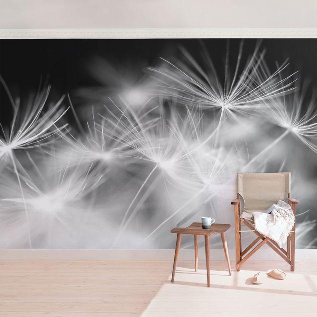 Fototapete Bewegte Pusteblumen Nahaufnahme auf schwarzem Hintergrund