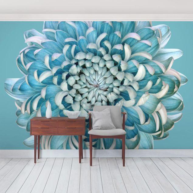 Fototapete Blaue Chrysantheme