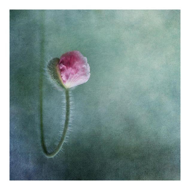Fototapete Blüte in Rosa