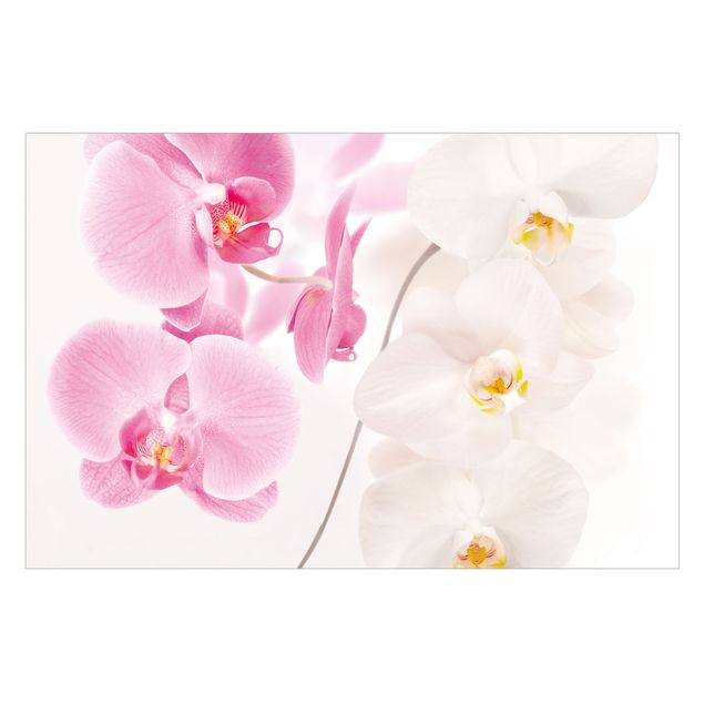 Fototapete Delicate Orchids