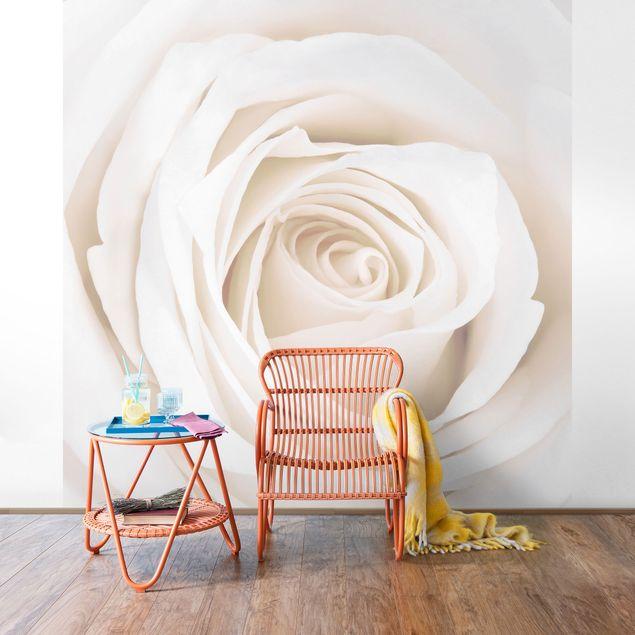 Fototapete Pretty White Rose