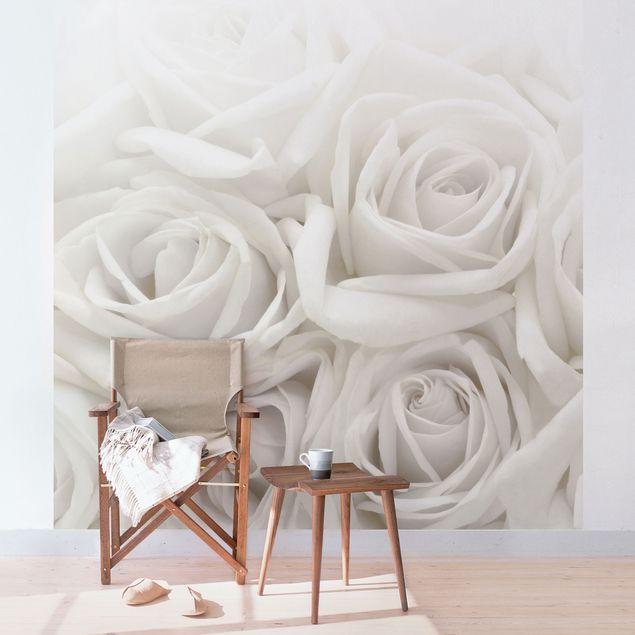 Fototapete Weiße Rosen