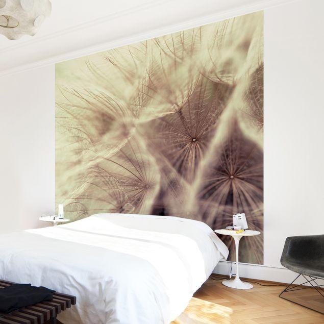 Fototapete Detailreiche Pusteblumen Makroaufnahme mit Vintage Blur Effekt