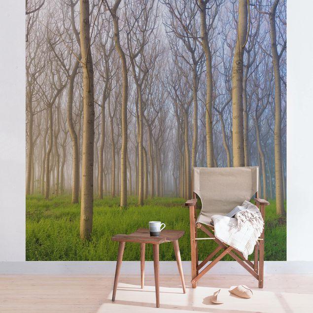 Fototapete Morgen im Wald