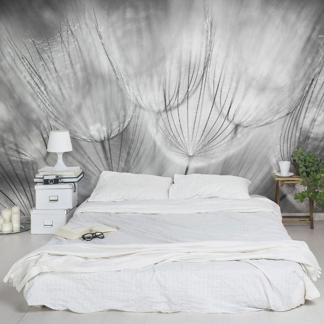 Fototapete Pusteblumen Makroaufnahme in schwarz weiß