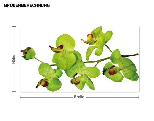 Wandsticker Orchideenzweig