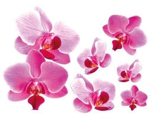 Wandsticker Rosa Orchideen