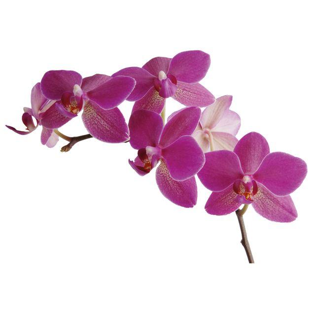 Wandtattoo Orchidee No.SB58 Orchidee II